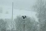 Blick aus dem Fenster - ein Heilbronner Wetterhahn im Schnee